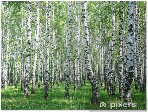 Plakat samoprzylepny Wiosna brzozowy las z śwież - Style