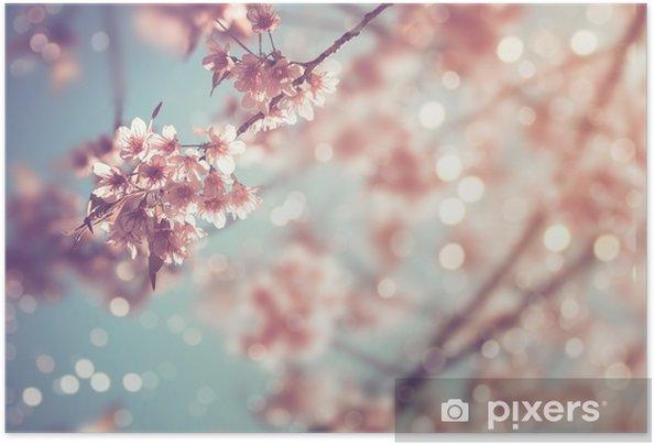 Plakat samoprzylepny Zbliżenie piękny kwiat vintage sakura drzewa (kwiat wiśni) na wiosnę. styl vintage kolor dźwięku. - Rośliny i kwiaty
