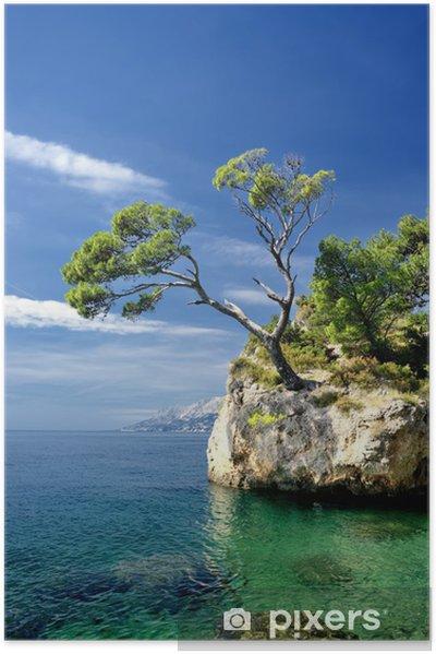 Plakat samoprzylepny Znani piękne skały z sosny w Brela w Chorwacji - Tematy