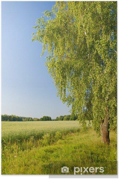 Plakat Samotna brzoza w polu - Pory roku