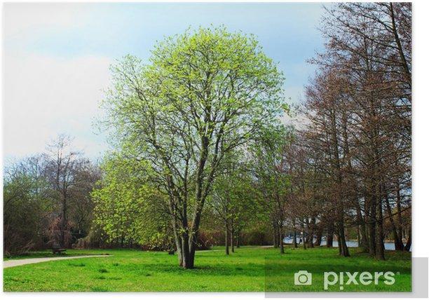 Plakat Sceneria - Drzewa