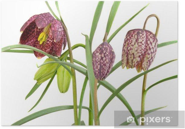 Plakat Schachbrettblume - Kwiaty