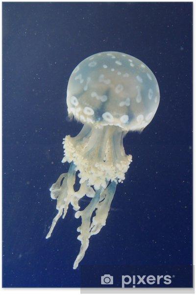 Plakát Schwebende Qualle - Vodní a mořský život