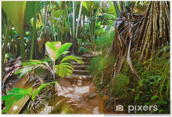 Plakat Ścieżka w dżungli, Vallee de Mai, Seychelles - Tematy