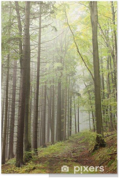 Plakat Ścieżka w mglistym lesie jesienią - Lasy