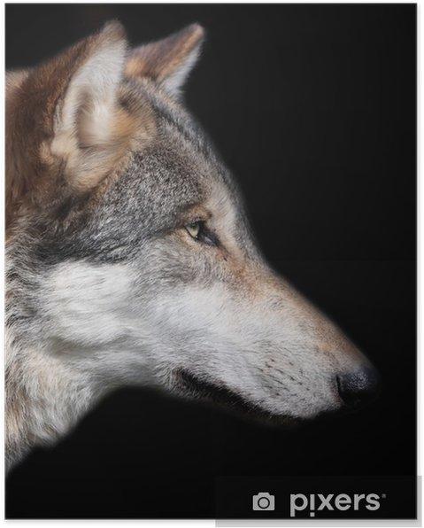Plakát Šedý vlk na černém pozadí - Témata