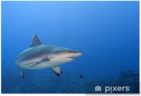 216c82bc9ec Plakát Šedý žralok čelisti připravené k útoku pod vodou zblízka portrét