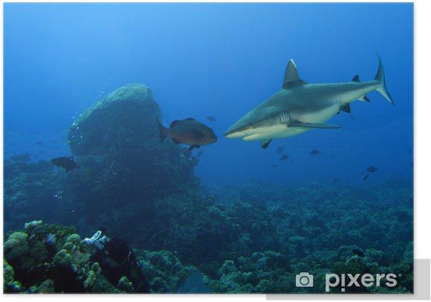 Plakát Šedý žralok čelisti připravené k útoku pod vodou zblízka portrét - Vodní a mořský život