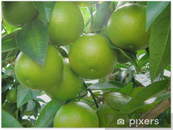 Plakát Sevillské pomeranče - Ovoce