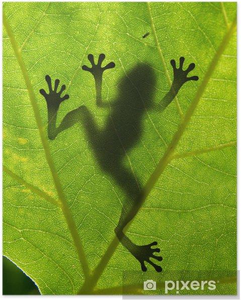 Plakat Shadow żaba na liściu - Rośliny