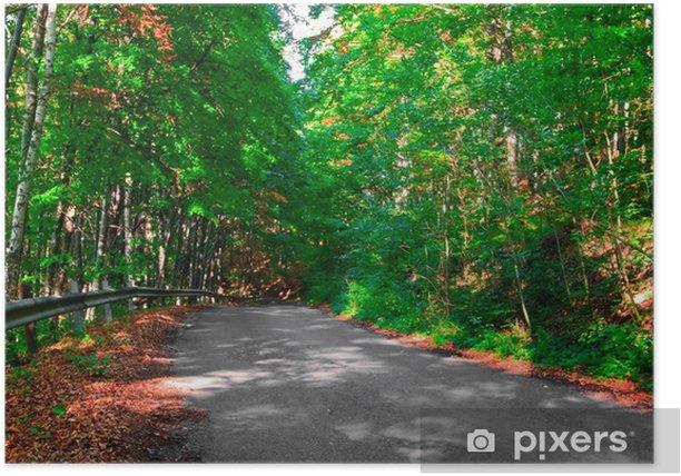 Plakát Silnice v zeleném lese. - Lesy