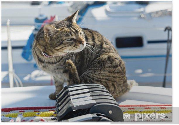 Plakat Skipper kota takielunku jachtu - Transport wodny