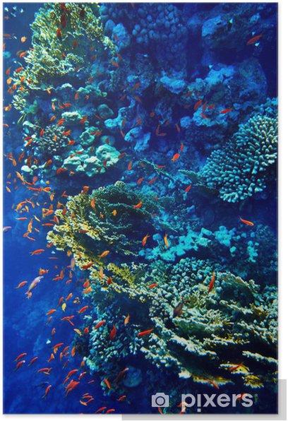 Plakát Skupina korálových ryb vody. -
