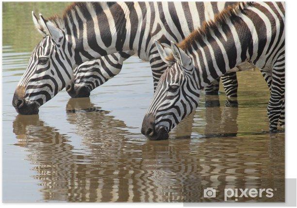 Plakát Skupina zebry pití - Témata