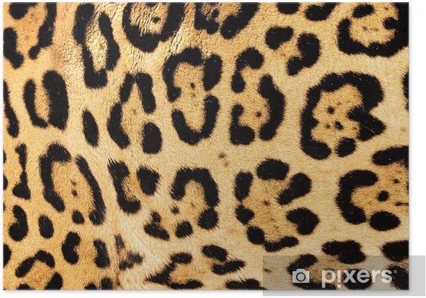 Plakát Skutečný živý Jaguar Skin Fur textury na pozadí - Savci