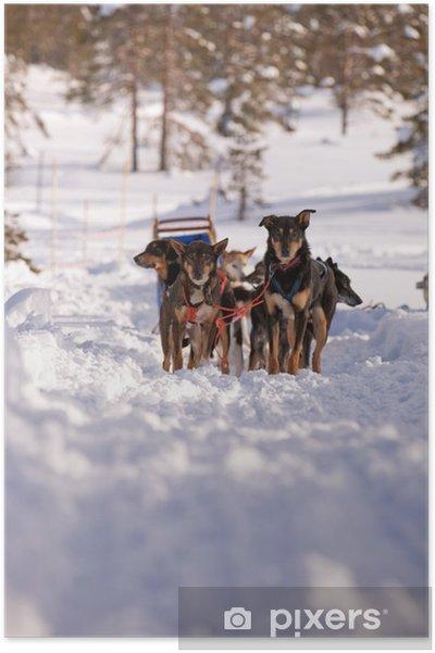 Plakat Sled Dog - Wakacje