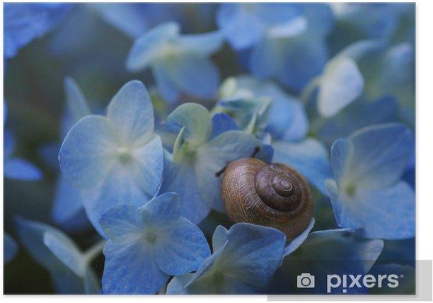 Plakat Ślimaki i hortensja - Kwiaty