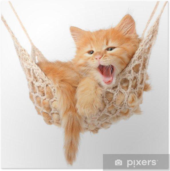 Plakat Słodkie rudowłosa kotka w hamaku - Przeznaczenia