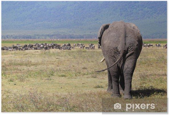 Plakat Słoń afrykański i stada gnu - Tematy