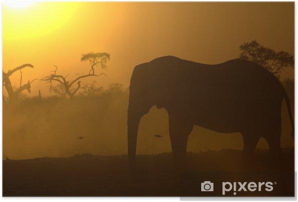 Plakat Słoń afrykański w sunrise - Tematy