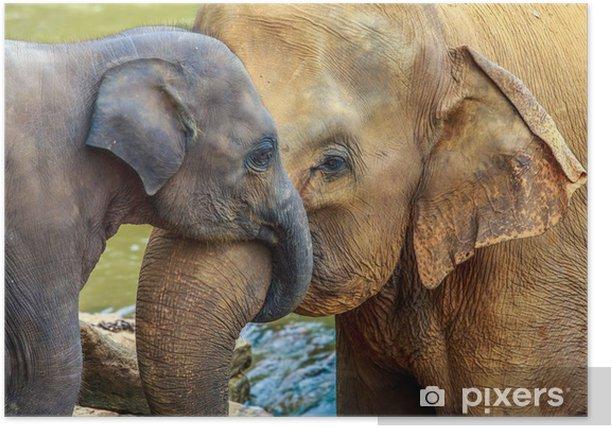 Plakat Słoń i słoń dziecko - Ssaki