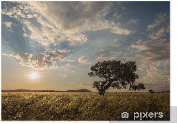 Plakat Słońce za drzewa w Sossusvlei, Namibia - Natura i dzicz