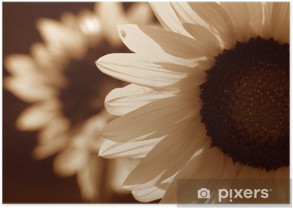 Plakat Słonecznik w sepii - Tematy