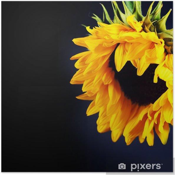 Plakat Słonecznik - Tematy