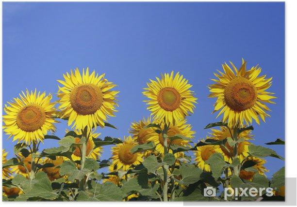 Plakat Słoneczniki - Tematy