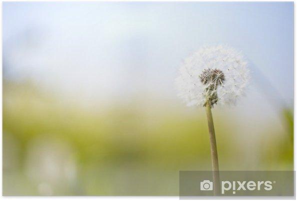 Plakat Słoneczny blowball kwiat - Tematy