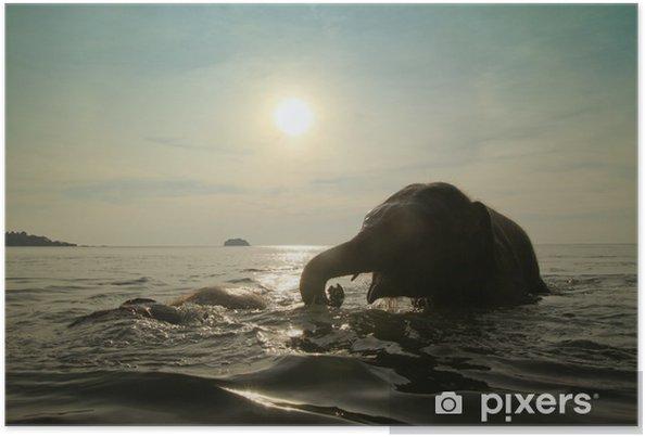 Plakat Słonie kąpieli w morzu - Ssaki