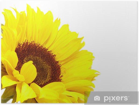 Plakát Slunečnice - Květiny
