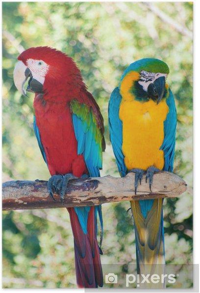 Plakát Smějící se papoušci - Témata