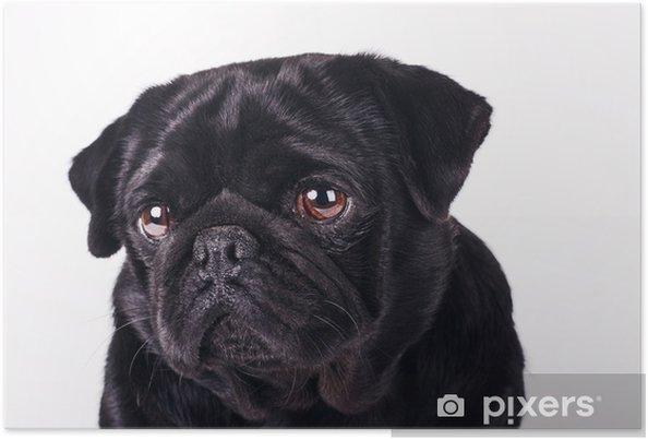 c5a0dd1810a Plakát Smutný pes • Pixers® • Žijeme pro změnu