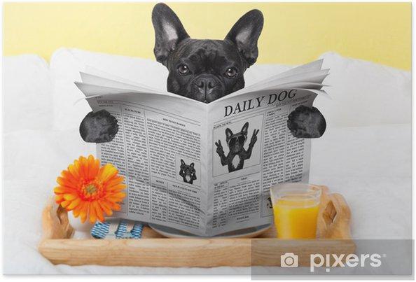 Plakat Śniadanie w łóżku - Buldogi francuskie