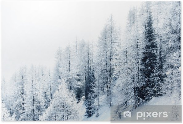 Plakat Snow covered forest - Criteo