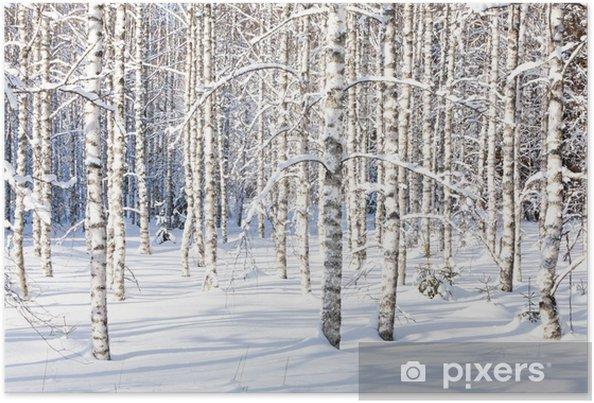 Plakat Snowy pni brzozy - Style