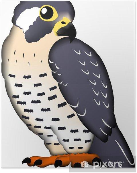 Plakat Sokół - Ptaki