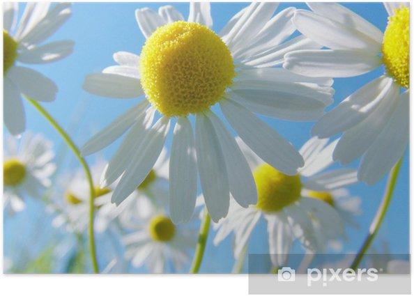 Plakat Sommerwiese -