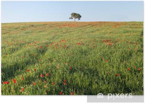 Plakat Sosna na wzgórzu - Krajobraz wiejski