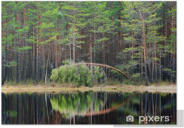 Plakat Sosnowy las i jezioro - Drzewa