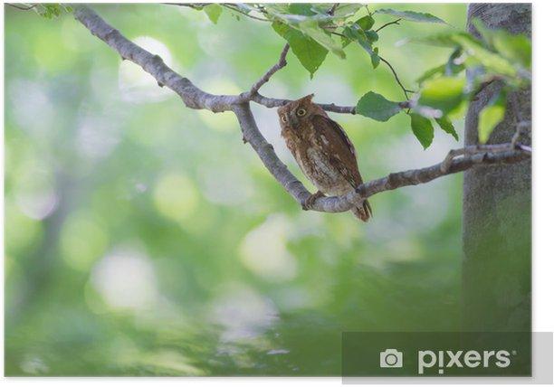 Plakat Sowa - Ptaki