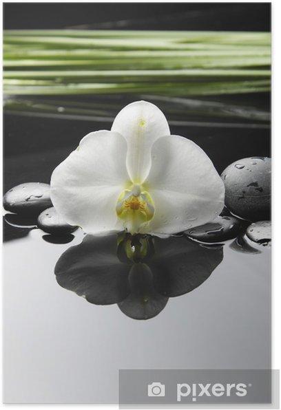 Plakat Spa martwa natura z orchidea z zielonych roślin na krople wody - Uroda i pielęgnacja ciała