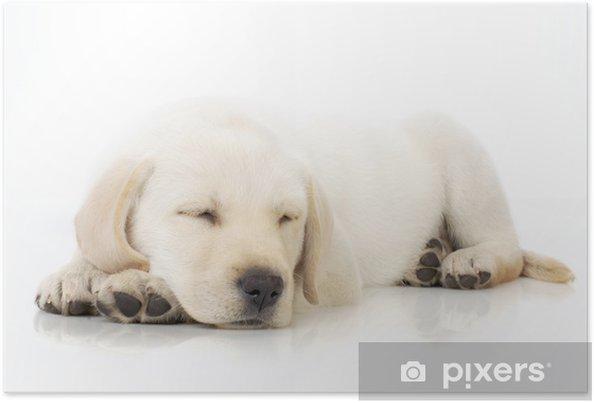 Plakát Spící štěně - Savci