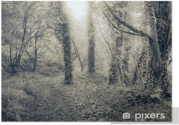 Plakat Spooky lasu o wschodzie słońca - Lasy