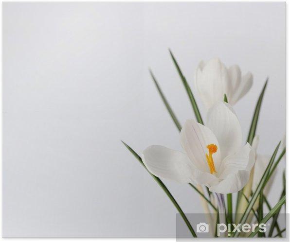 Plakát Spring flowers - Květiny