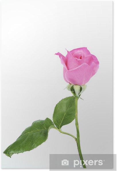 Plakat Spring Rose - Szczęście