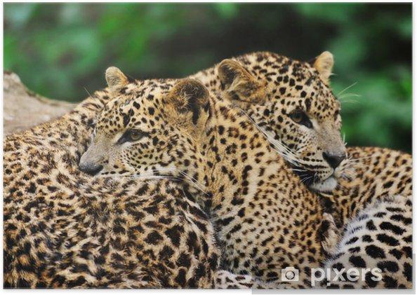 Plakat Sri Lanka leopard - Ssaki