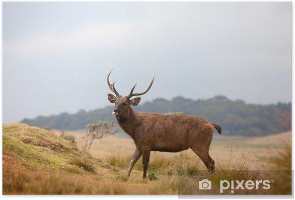 Plakat Sri Lanki Sambar Indyjski W Parku Narodowym Horton Równin