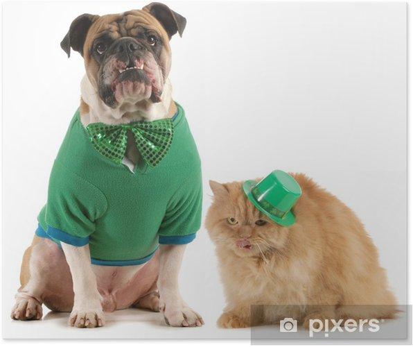 Plakat St dzień patricks i kot pies - Ssaki